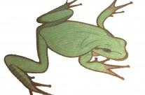 Mosaïque grenouille