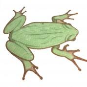 Motif piscine grenouille