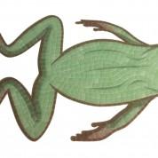 Motif grenouille nage